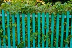 grönt staket och de gröna sidorna Arkivbild