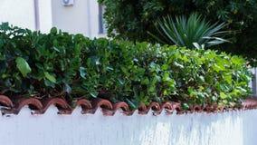 Grönt staket på ett vitstenstaket arkivbild