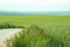 Grönt stort fält med blommor Royaltyfri Foto