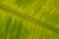 grönt stort för fragment Arkivfoto