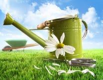 grönt stort kan bevattna för tusensköna Royaltyfri Foto