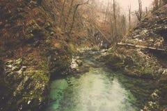 Grönt strömvatten och mossigt vaggar på i skog royaltyfria foton