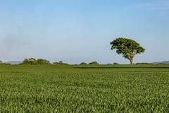 Grönt Sussex landskap Royaltyfria Foton