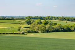 Grönt Sussex landskap arkivbilder