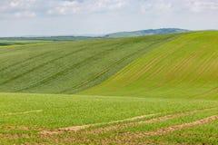 Grönt Sussex landskap royaltyfria bilder