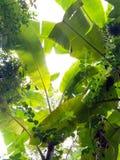 grönt tak Arkivbilder