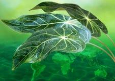 grönt tak för jord Royaltyfria Foton