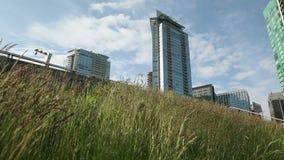 Grönt takdockaskott, i stadens centrum Vancouver Arkivbild