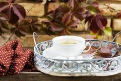 Grönt te för höst Royaltyfria Foton