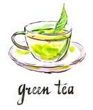 Grönt te för vattenfärg Vektor Illustrationer