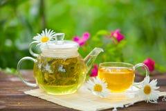 Grönt te med kamomill i kopp Arkivbilder