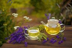 Grönt te med kamomill i kopp Royaltyfri Bild