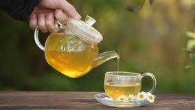 Grönt te med kamomill i kopp stock video