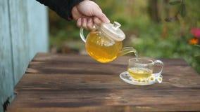 Grönt te med kamomill i kopp lager videofilmer