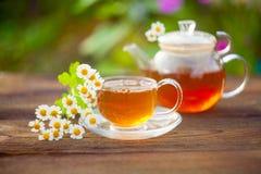 Grönt te med kamomill i kopp Fotografering för Bildbyråer