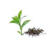 Grönt te och torrt te på vit bakgrund royaltyfria bilder