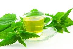 Grönt te som göras av att sticka nässlan på vit bakgrund Fotografering för Bildbyråer