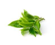 Grönt teblad som isoleras på vit bakgrund Fotografering för Bildbyråer
