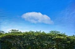 Grönt träd Arkivfoton