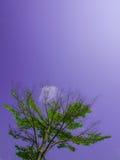 Grönt träd Arkivbild