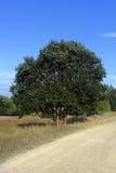 Grönt träd bredvid vägen under blå himmel Royaltyfri Bild