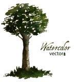 Grönt träd för vattenfärg för din design Arkivbild