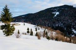 Grönt träd i förgrunden Vinterbergsikt på gryning, Royaltyfri Fotografi