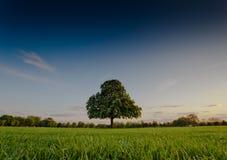 Grönt träd i mitt av parkera Royaltyfria Foton
