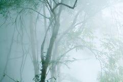 Grönt träd med dimma på den varma våren Arkivfoto
