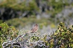 Grönt träd med en fågelbakgrundstextur Fotografering för Bildbyråer