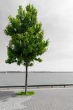 Grönt träd mot svartvitt sjölandskap Royaltyfri Bild