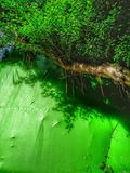 Grönt träd och dess skugga Royaltyfria Bilder