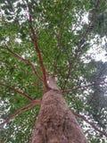 Grönt träd och filialer arkivbild