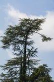 Grönt träd och himmel royaltyfria bilder
