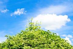 Grönt träd- och vitmoln Royaltyfria Foton