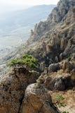 Grönt träd på den skarpa kanten av vagga i dalen av spökar i republiken av Krim royaltyfri fotografi