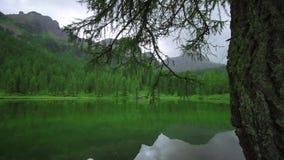 Grönt träd på en bergsjö stock video