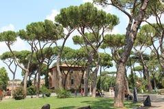 Grönt träd på grässlätt under dag royaltyfri foto