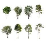 Grönt träd på isolerat på vit bakgrund Samlingen av träd royaltyfria foton