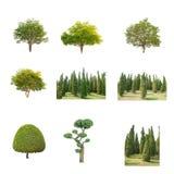 Grönt träd på isolerat på vit bakgrund Samlingen av träd royaltyfri foto