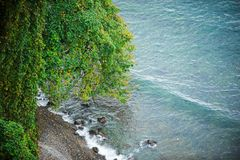 Grönt träd på strandsikten från över Royaltyfri Bild