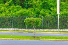 Grönt träd på vägen arkivbild