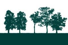 Grönt träd som isoleras i vit Arkivfoton