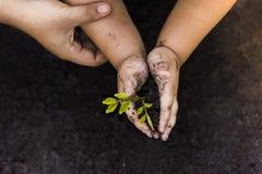 Grönt träd som planterar världsgräsplan Träd med pengar, sparande pengar och växande händer fotografering för bildbyråer