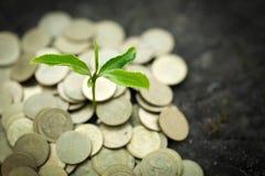 Grönt träd som växer på pengarmynt, besparing, tillväxt, hållbar utveckling, ekonomiskt begrepp royaltyfria bilder