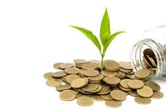 Grönt träd som växer på pengarmynt med isolerat på vit bakgrund, besparing, tillväxt, hållbar utveckling, ekonomiskt begrepp royaltyfri foto