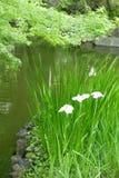 Grönt träd-, växt- och vattendamm i trädgården arkivbilder