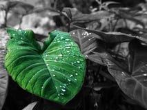 Grönt trädgårds- blad arkivfoto