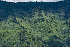 Grönt trädräkningsberg Arkivfoto