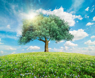 Grönt trädvårlandskap Arkivfoto